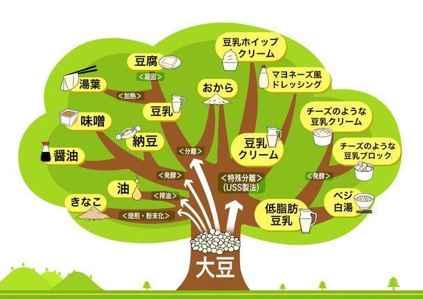 大豆の木(ソイツリー)