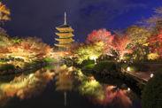 東寺のライトアップの様子