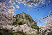 御船山楽園と桜