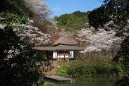 萩野尾御茶屋と桜