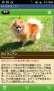 犬種詳細画面