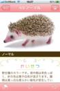 【小動物解説画面】