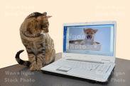 (サンプル)猫とパソコン