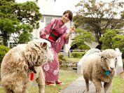 羊さんとのふれあい広場