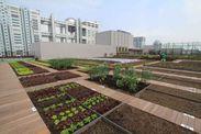 都会の農園