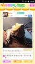 ペットカメラ 爬虫類