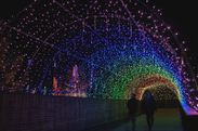 堀金・穂高地区(光のトンネル)※昨年度の様子