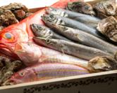 九州・静岡・茨城から 直送される新鮮魚介類