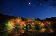 九州最大の紅葉ライトアップ