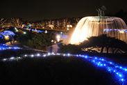 昭和記念公園のイルミネーションといえば、大噴水のライトアップ。圧巻のスケールで水面を照らし出します。清らかな水のながれが煌めき、幻想的な光景です。