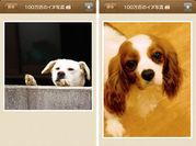 100万枚の犬写真
