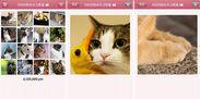 100万枚の猫写真
