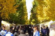 『駒場祭』銀杏並木