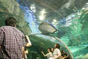 しながわ水族館館内写真2