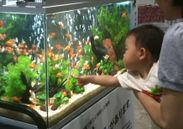 金魚とあかちゃん