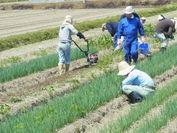 第2期農場実習(1)