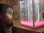 熱帯魚と子供