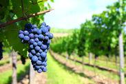 バラエティ豊かなイタリアワインのラインナップを