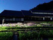 トワイライト花菖蒲園