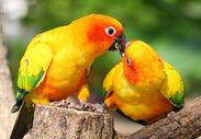 掛川花鳥園:インコ