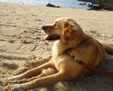 愛犬と一緒に宮古島の美しい海を眺めながらのんびりお散歩