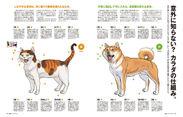 犬と猫のカラダの仕組みをわかりやすく解説