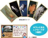 深海ハンター!カード
