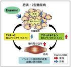 肥満・2型糖尿病に対する予防的効果