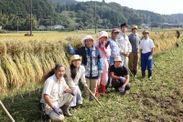 コシヒカリの収穫