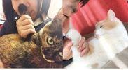 「社内の猫の飼い主による調査」
