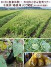 わくわく農業体験! 大地から学ぶ食育ツアー