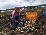 品川甚作農園 にんにく栽培(1)