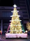 今年のクリスマスツリー(イメージ)
