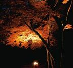 紅葉ライトアップ(イメージ)