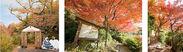 昨年11月の「太閤四季彩園」紅葉の棚田