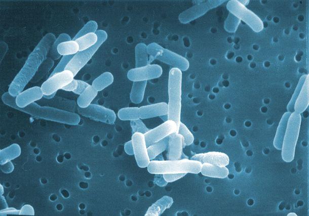 ロイテリ菌の特許保有企業が薬剤耐性との戦いを支援。日本では歯科医療分野から|バイオガイアジャパン株式会社のプレスリリース