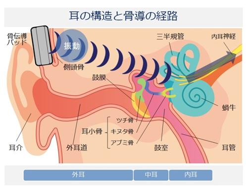 耳の構造と骨導の経路