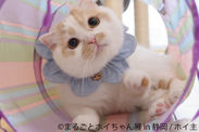 フォロワー29万超の人気猫「ホイちゃん」静岡で単独展開催 新作写真や会場限定グッズ満載で甘えん坊猫に癒やされよう!