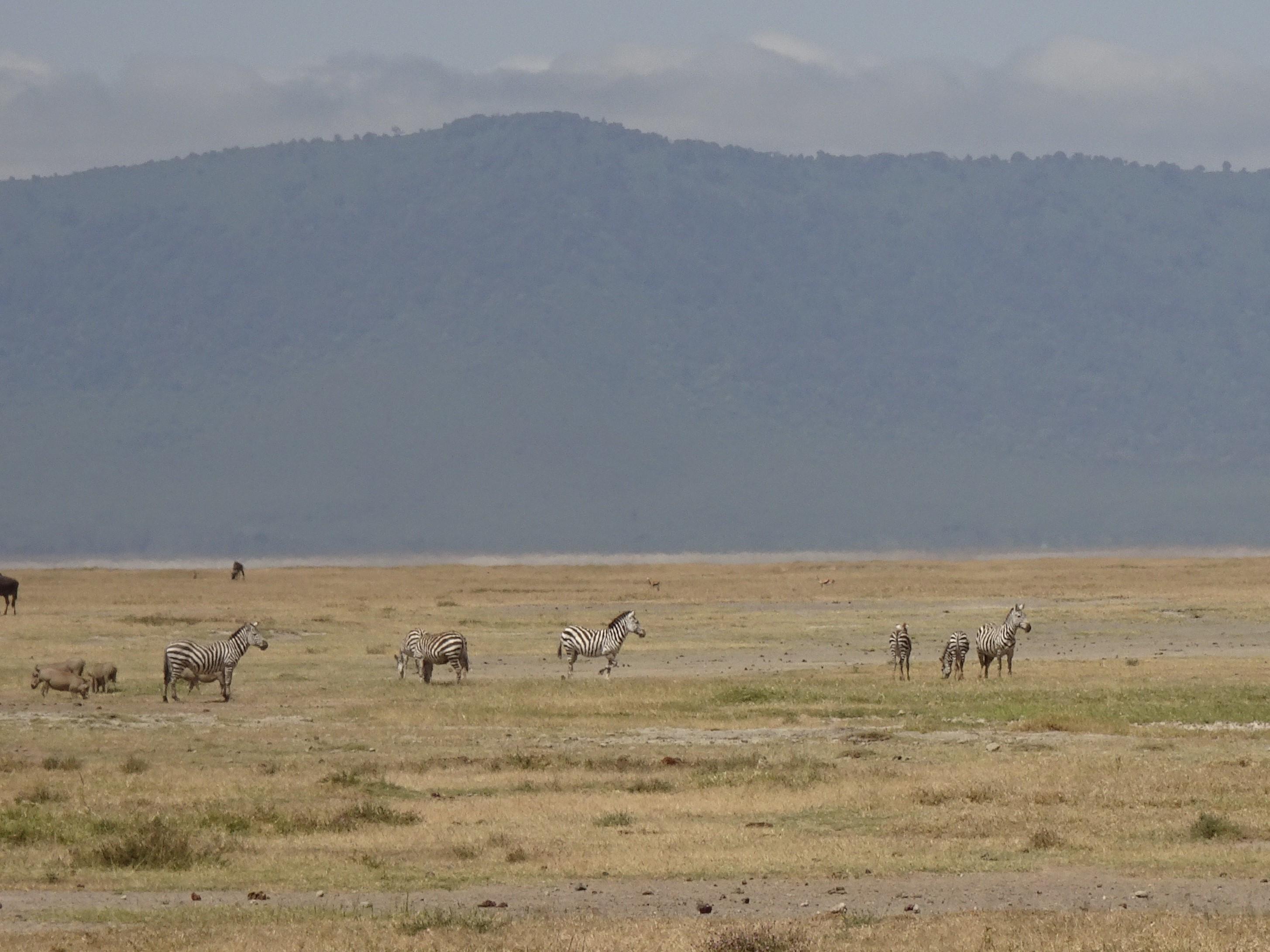 アフリカの野生動物-1