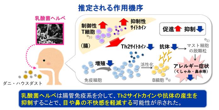 乳酸菌 ヘルベ