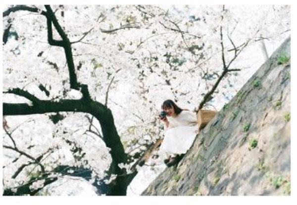 ~阪急電車で桜シーズンを先取り~期間・本数限定掲出決定!人気の「写真家・岩倉しおり」撮影による「エメ... 画像