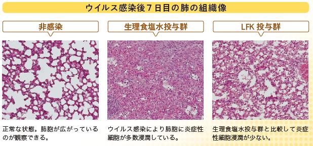 ウイルス 乳酸菌