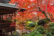秋の特別早朝拝観プラン「宝厳院」