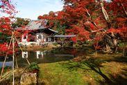 秋の特別早朝拝観プラン「高台寺」