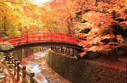 秋の特別早朝拝観プラン「北野天満宮」