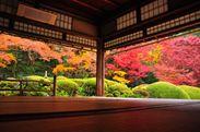 秋の特別早朝拝観プラン「詩仙堂」