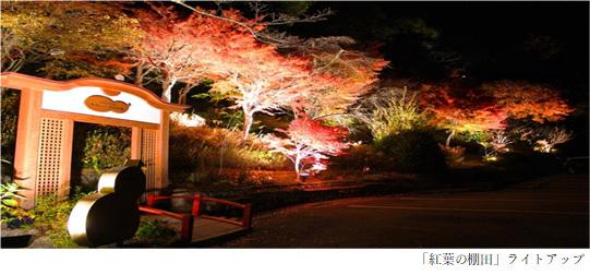 有馬唯一の紅葉ライトアップを「太閤の湯」園内「紅葉(こうよう)の棚田(たなだ)」で開催GOTO有馬ナイトイベント!「写メってお得に太閤の湯キャンペーン」開催2020年11月1日(日)から