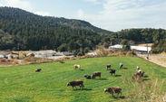 鹿児島県の伊佐牧場