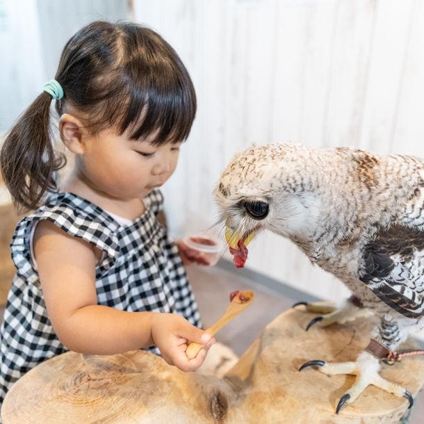 大阪・なんばの猛禽類カフェ「raptorland Shovel」が出張サービスを ...