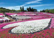 SLツアー 秩父羊山公園 芝桜の丘 イメージ